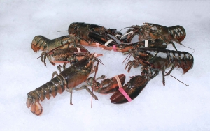 lobster_group.jpg